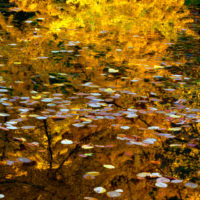 Autumn reflections SQ 704
